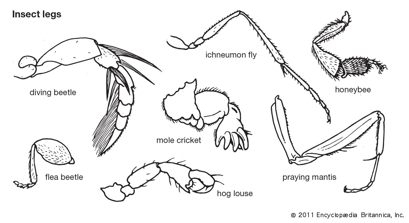 108456-050-1F0E1784.jpg (1600×872) | Insect Anatomy | Pinterest ...