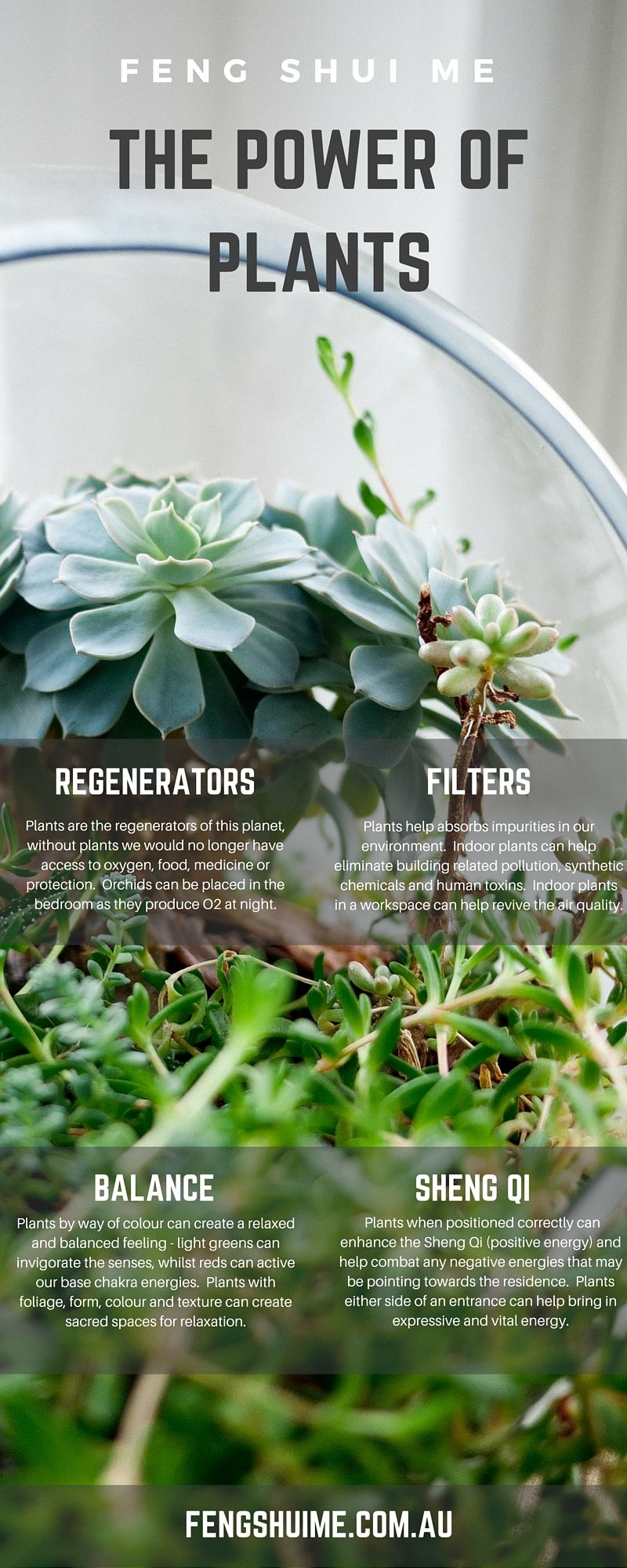 The Power Of Plants Feng Shui Regenerate Filter
