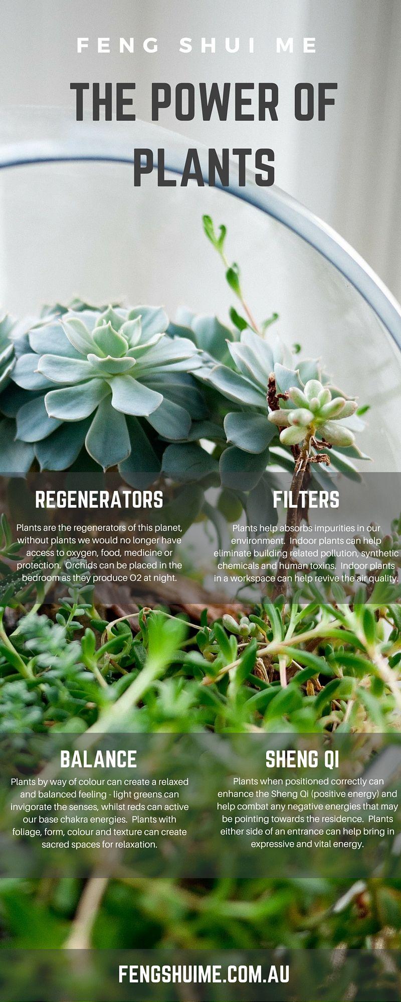 the power of plants feng shui regenerate filter balance positive energy fengshui www. Black Bedroom Furniture Sets. Home Design Ideas