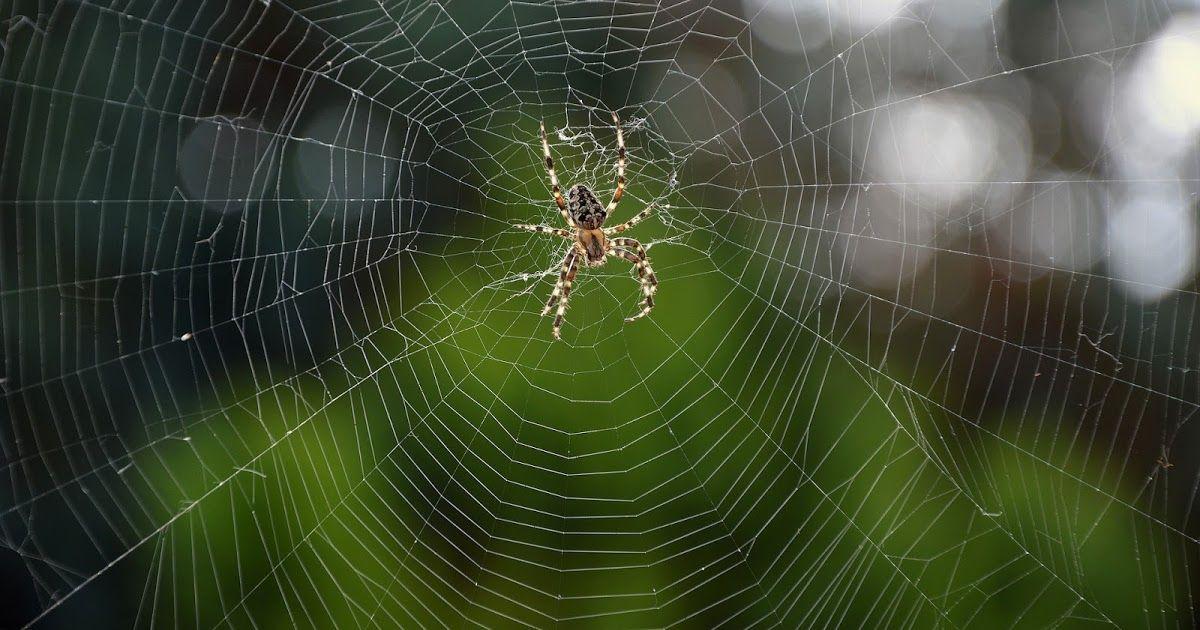 Halloween Spider Poncho Reviewed Spider Halloween Spider Creatures