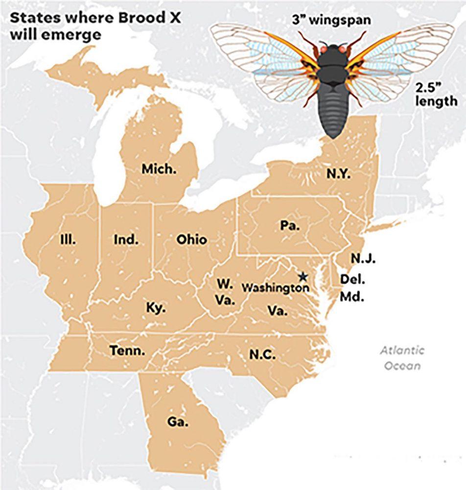 Cicadas Map In 2021 Cool Gifs Cicada Map