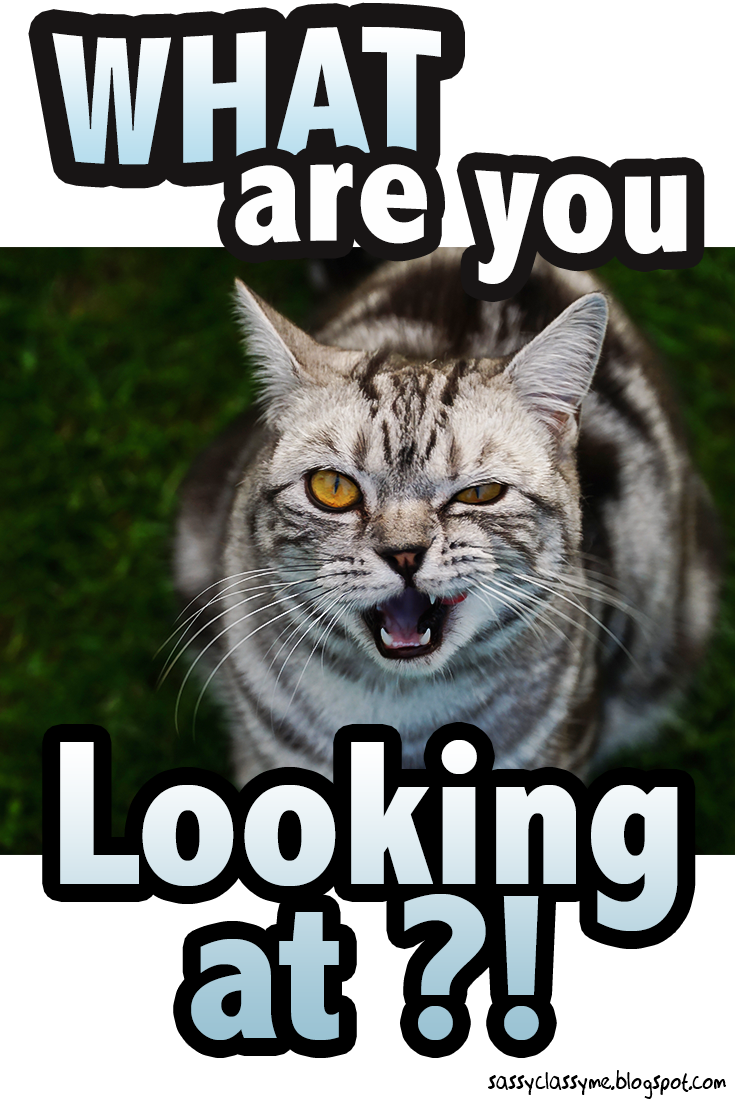 5 Hilarious Cat Memes What Are You Looking At Cat Memes Quotes Hilarious Catsandkittens Cats Ani Funniest Cat Memes Best Cat Memes Funny Cats