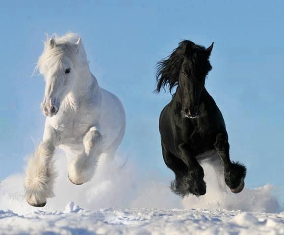 Great picture of horse's