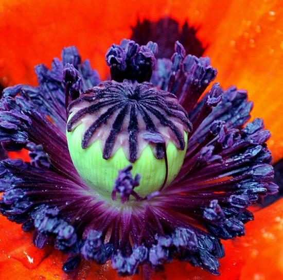 Nature macro image