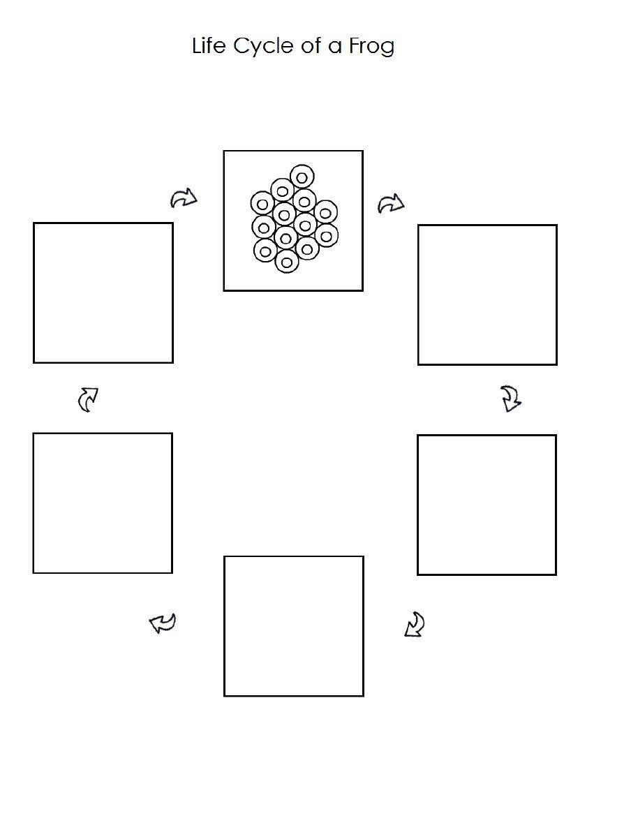 Worksheets Frog Life Cycle Worksheet frog life cycle worksheet fun with science pinterest worksheet