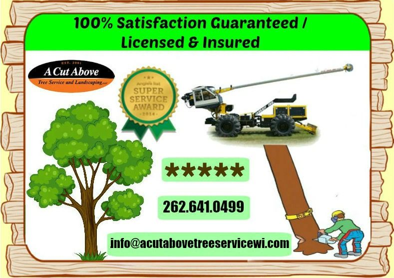 Get affordable tree removal and trimming services Tree
