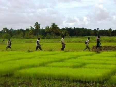 Il faut fortement accroître les investissements dans la production alimentaire en Afrique pour faire face à la demande croissante qui s'annonce d'ici 2050, déclare Global Harvest Initiative dans son rapport annuel publié hier. Selon le groupe de lobbying du secteur privé basé à Washington, seulement 13% des besoins alimentaires de l'Afrique subsaharienne seraient couverts d'ici là si de nouveaux investissements ne sont pas réalisés dans des secteurs comme la technologie ou encore les…
