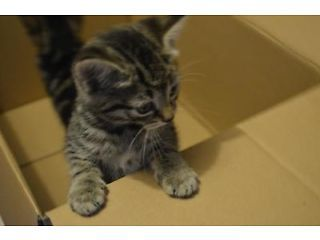 amazing kittens North West London Picture 5