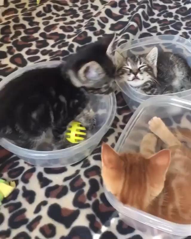 Video Bayi Kucing Barbar Di 2021 Bayi Kucing Kucing Cantik Hewan Lucu