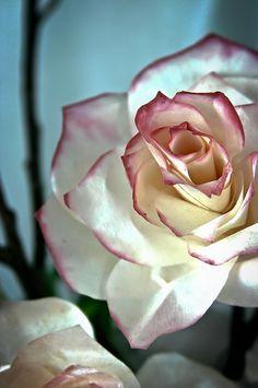 Filtros de café podem se transformar em flores incríveis! Veja como!