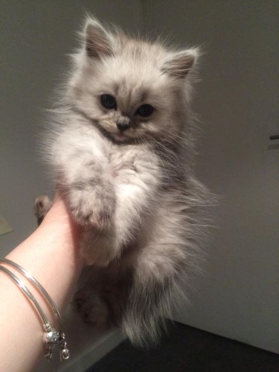 100 Photos Proving That Cats Are The Cutest Animal On Earth #adorablekittens