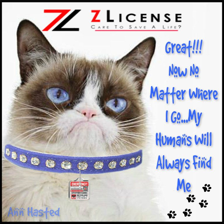 Better than a microchip or tattoo, check out this amazing new product www.joinzlicenseteam.com #b2b #dogtag, #petid