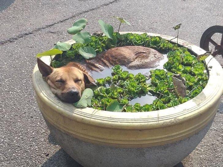 10+ фото собак, которые неоставят равнодушными даже кошатников. Ридус