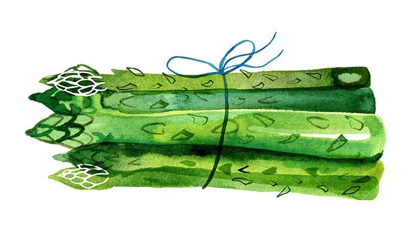 Asparagus by ©Margaret Berg. www.margaretbergart.com