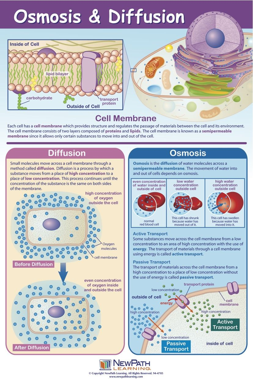 osmosis and cell How can the answer be improved.