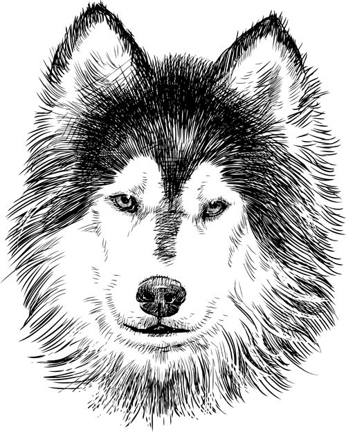 Hand Drawn Huskies Dog Vector 02 Huskies And Friends Dog Vector