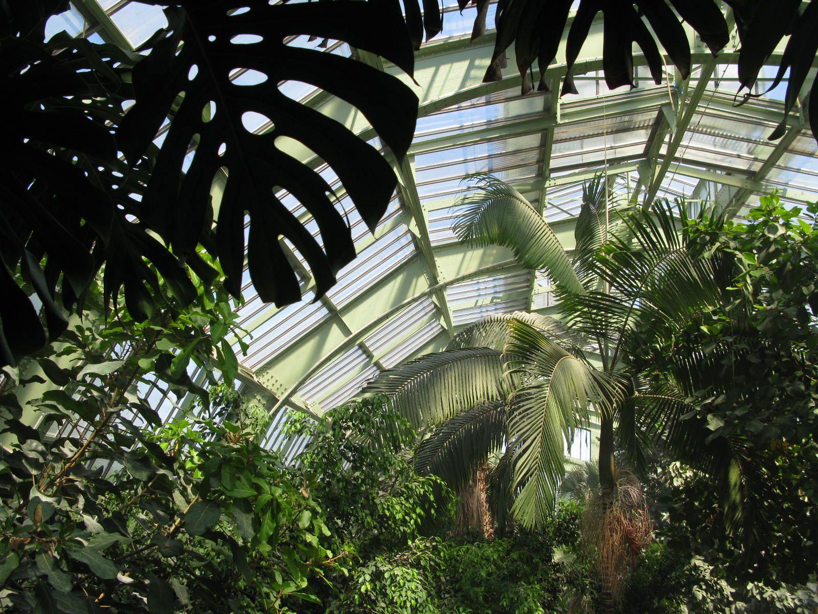 grande serre du jardin des plantes paris home pinterest france. Black Bedroom Furniture Sets. Home Design Ideas