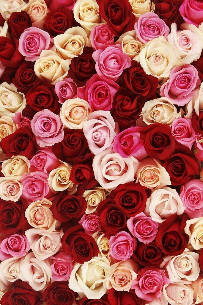flowers | floral | blooms | bunch of flowers | flower bouquet  | cut flowers | d