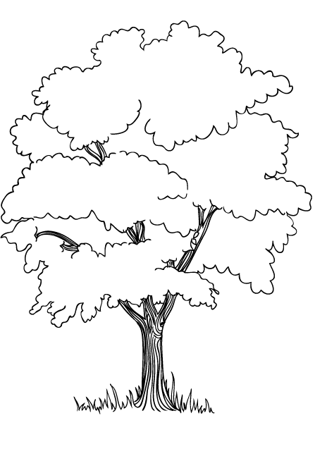 The Trees In The Jungle Coloring Pages Tree Coloring Page Tree Drawing Earth Day Coloring Pages