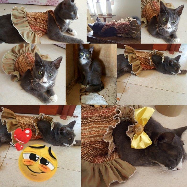 Baju Untuk Kucing