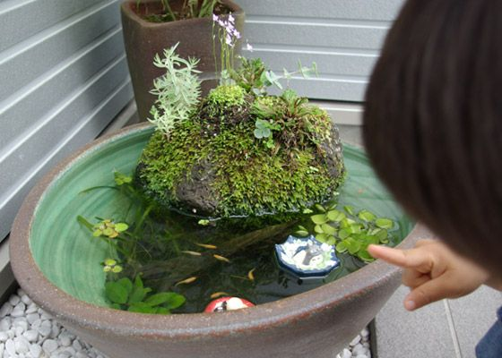 Google wabi kusa pinterest aquariums for Pop up aquarium