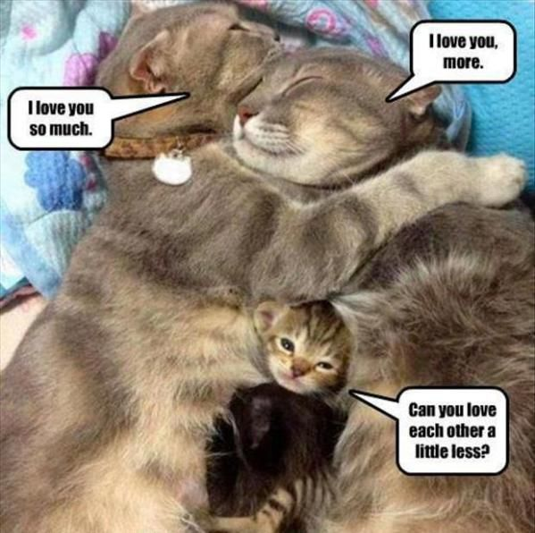 http://homerandgwen.me/afternoon-lol-cats-2?page=2