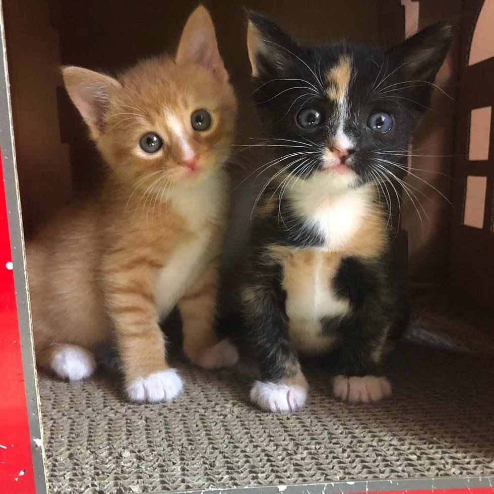 Kitten Brother And Sister Keep Each Other Alive Until They Are Saved Love Meow Cute Kitten Pics Cat Care Tortie Kitten