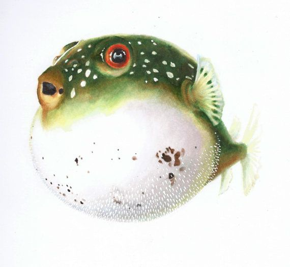 Original Art Print Northern Puffer Puffer Fish By Abunnyandbear 20 00 Puffer Fish Art Fish Drawings Watercolor Fish