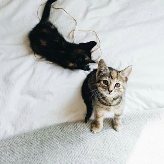Pin Aeslife Ig Antonia Ae Kittens Animals Cats And Kittens
