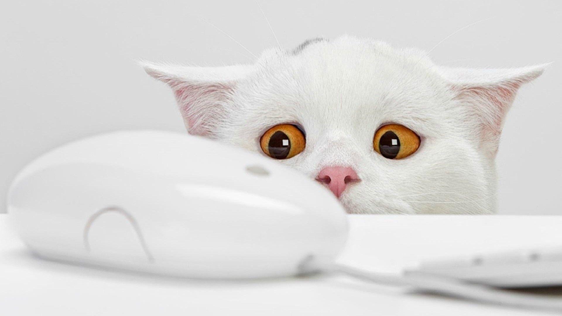 General 1920x1080 cats animals white bright orange eyes computer computer mice