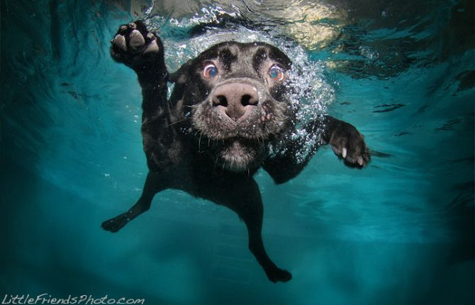 Pics Stop What You Re Doing And Look At Dogs Underwater
