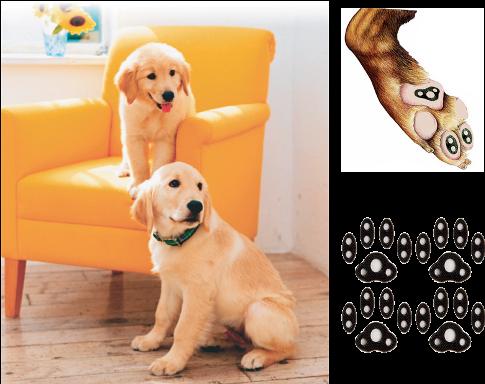 3a03a075da2589fa850c3e99906b9886 - How To Get Super Glue Off Dog S Paw