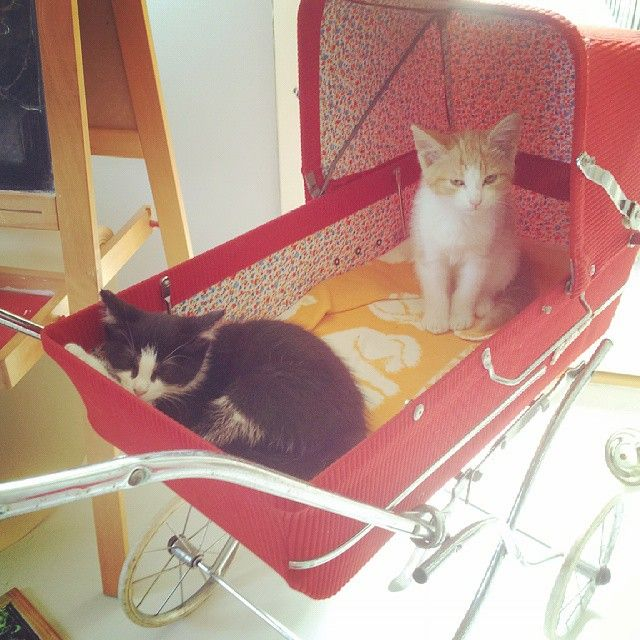 Vintage Strollers are not just for decorating with or babies.  They are also for kittens! ~MWP - Ralfefarfars paradis: Sommeren 2015...