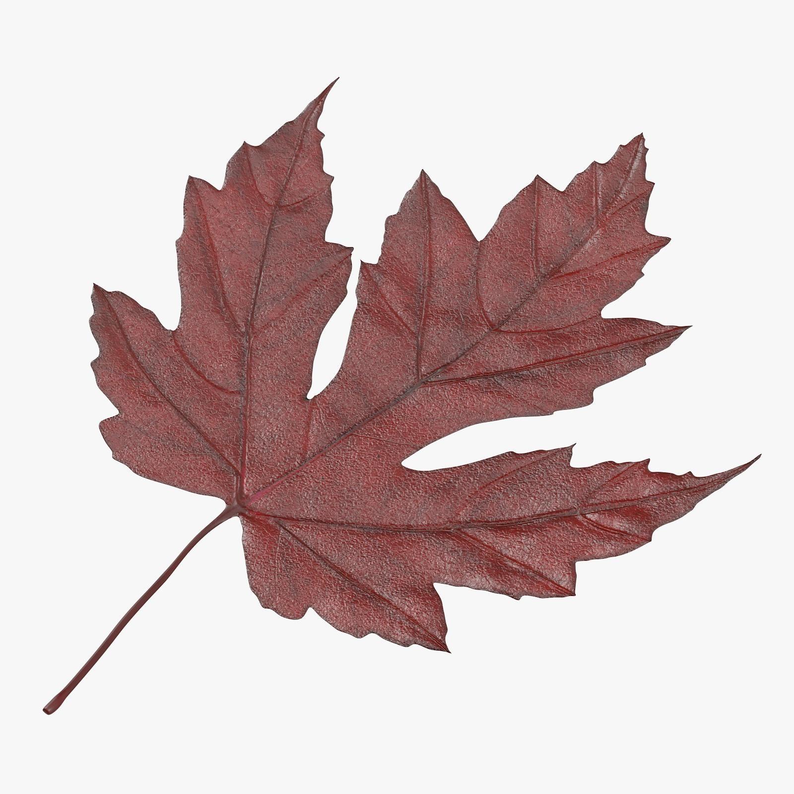Maple leaf bikini