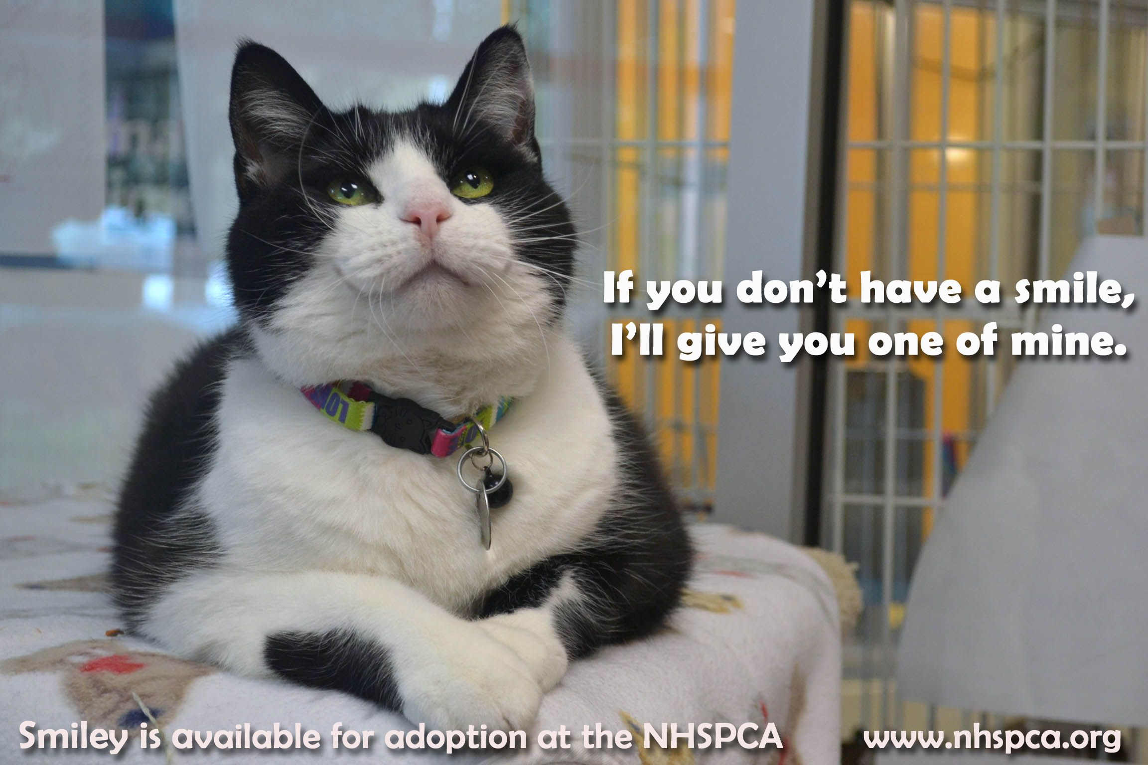Pin by New Hampshire SPCA on Adopt a Cat! Cats, Animals