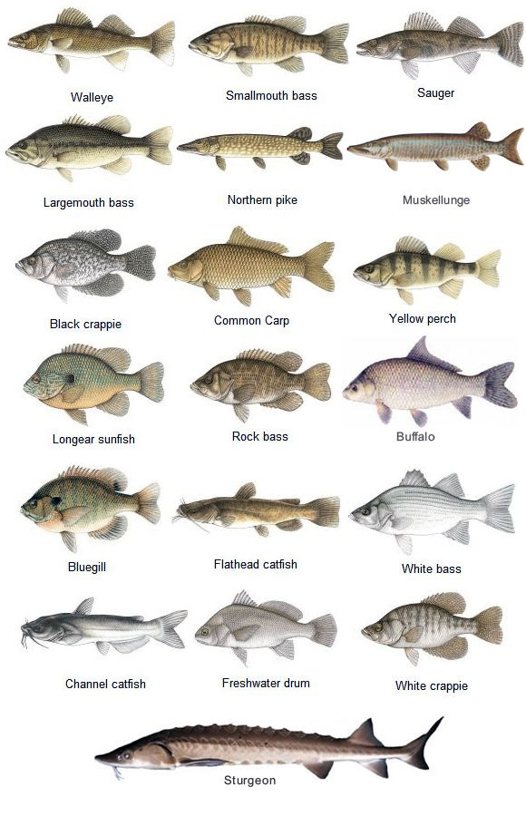 Types of River Fishing
