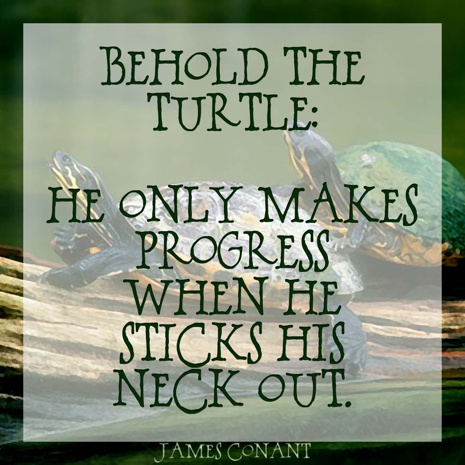 Sometimes you have to move like a turtle and stick your neck out a sometimes you have to move like a turtle and stick your neck out a bit biocorpaavc Choice Image