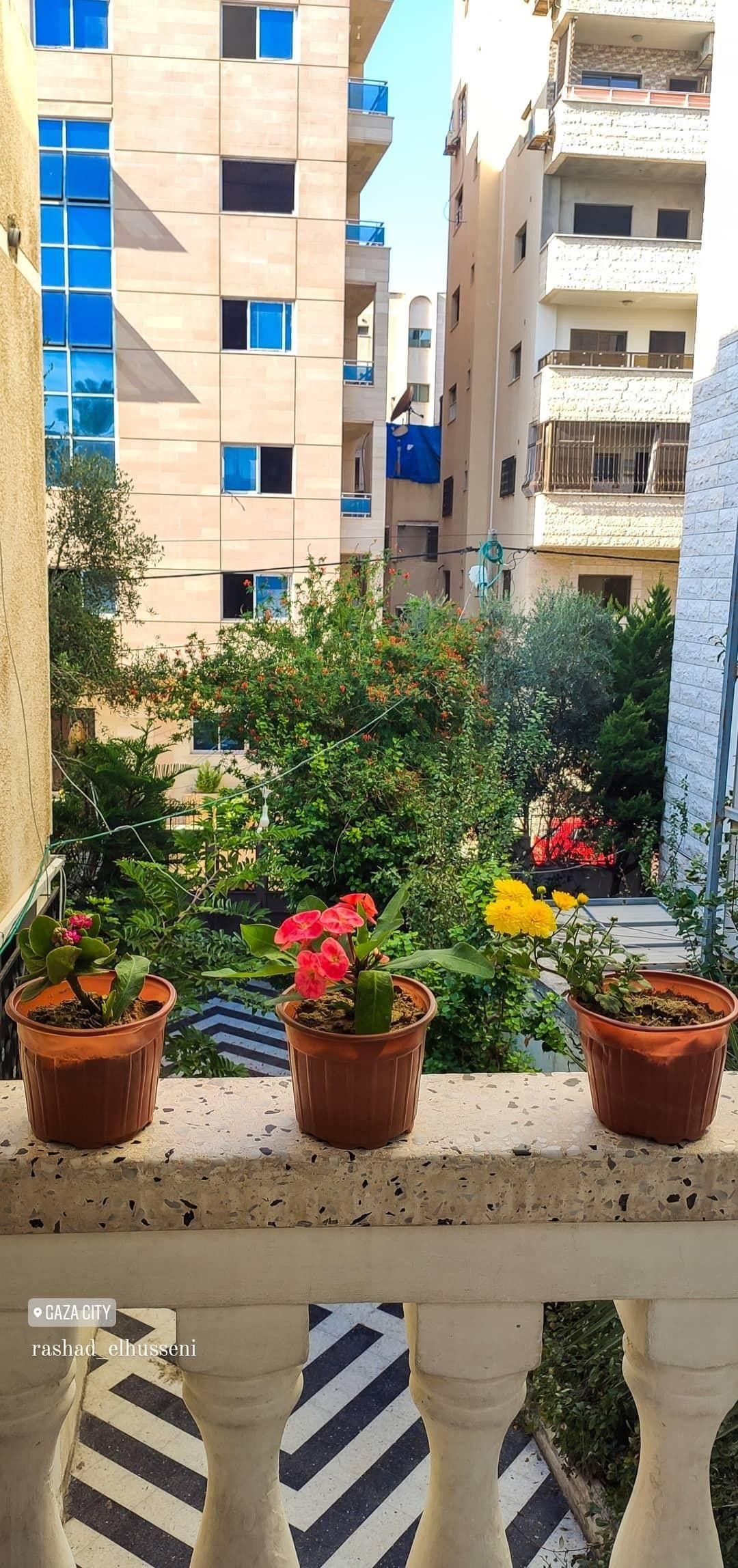 ورد أصفر طبيعة شجر اصفر غزة طبيعة جميل فلسطين القدس كلام تصوير صور ابيض صباح خير صل Plants Flowers