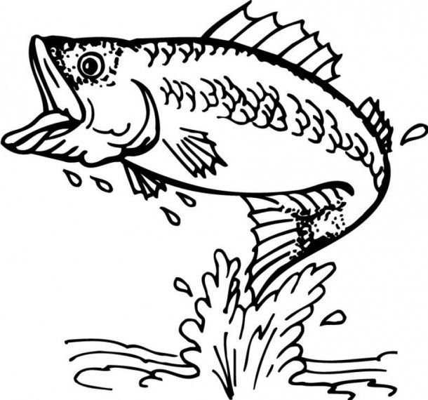 bass fish coloring pages animals more - Fishing Coloring Pages