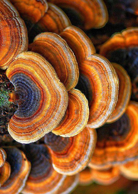 Осеннее вдохновение: грибы (с изображениями) | Грибы