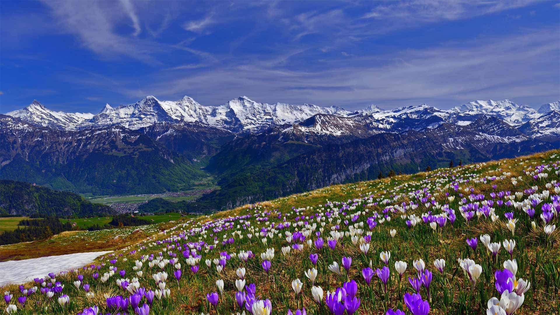 Spring Mountain Landscape Wallpaper for desktop & mobile