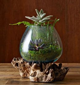 Elegant How To Make A Tabletop Terrarium