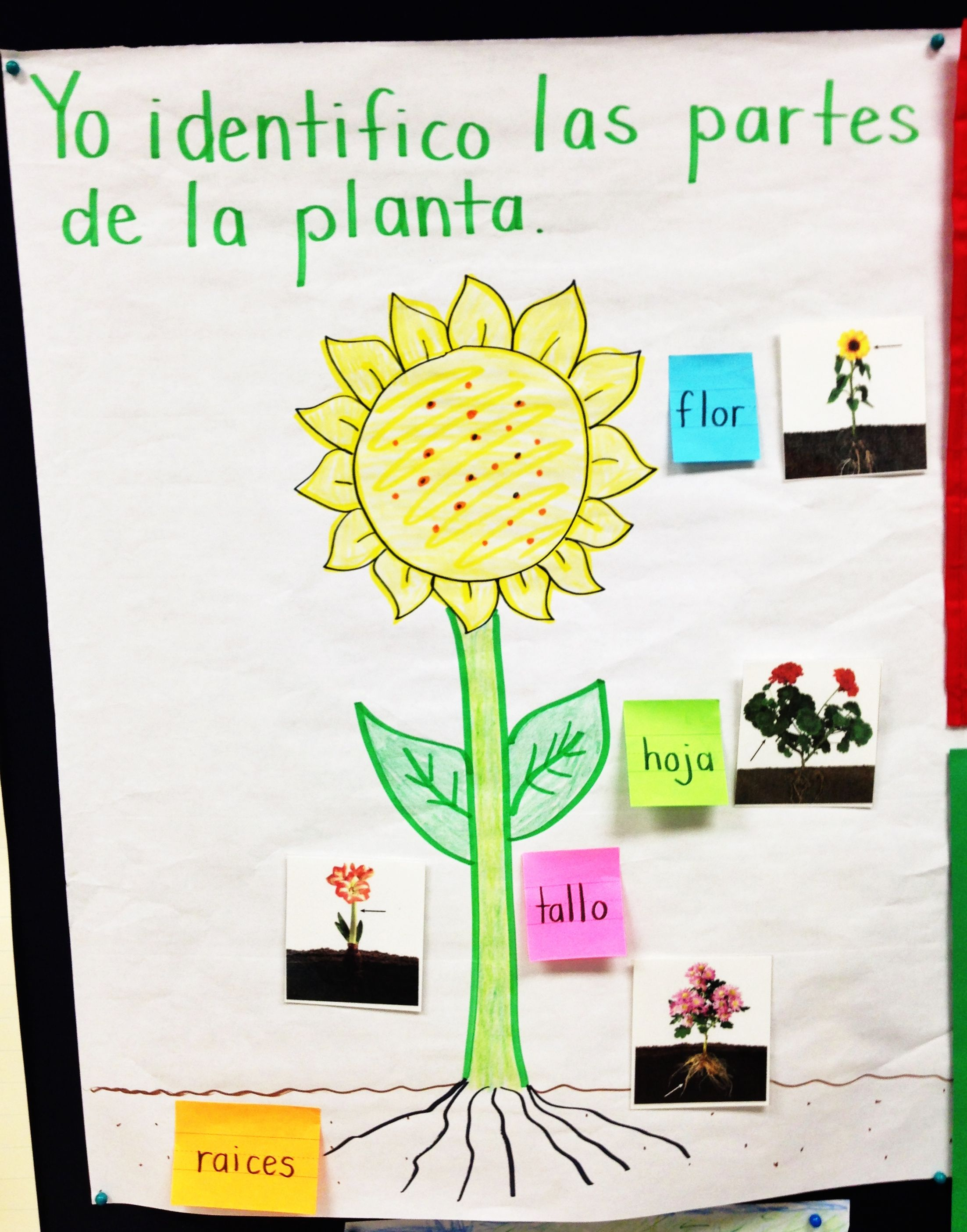 Parts Of A Plant Input Chart