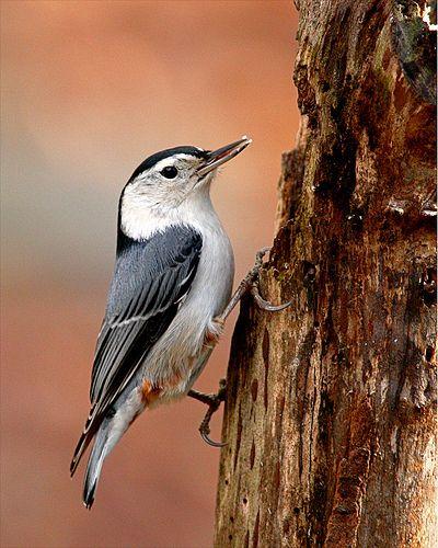 Pin On New England Wildlife Photography
