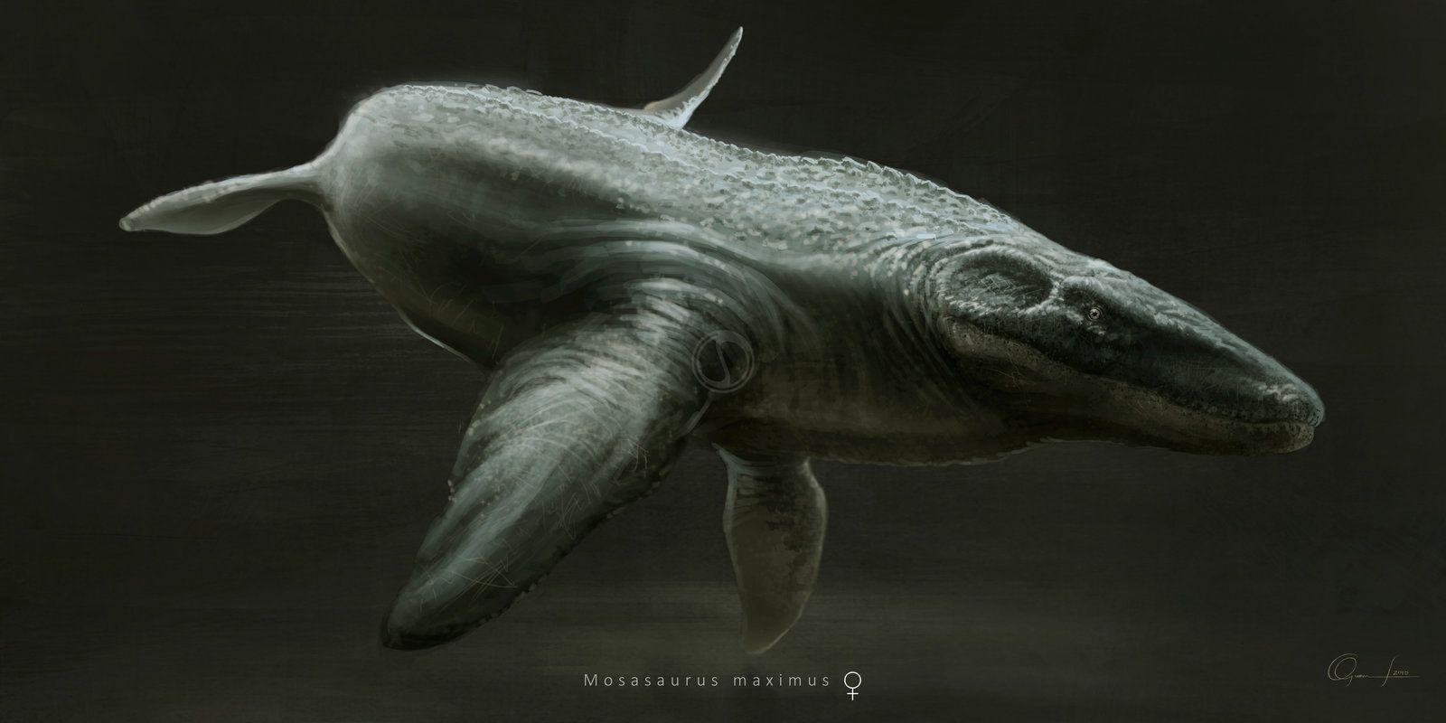 Mosasaurus Maximus Prehistoric Animals Ancient Animals Prehistoric