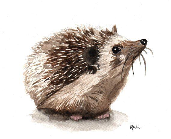 A5 Hedgehog Watercolour Print Original Handmade Ar