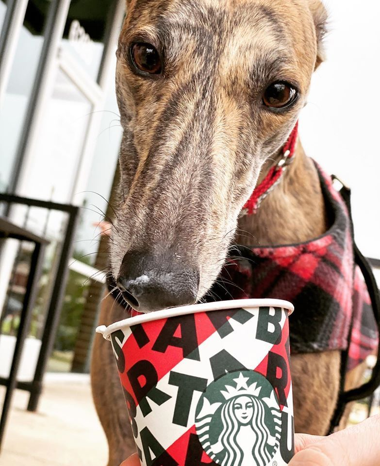 Give the hounds a special treat on line by starting a
