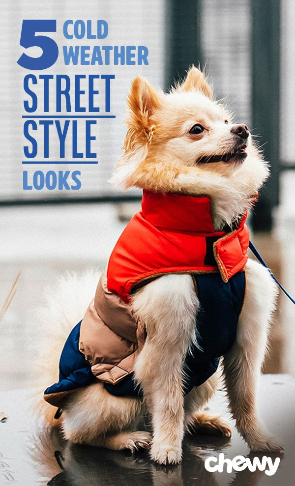 5 Winter Street Style Looks for Your Dog Pet fashion