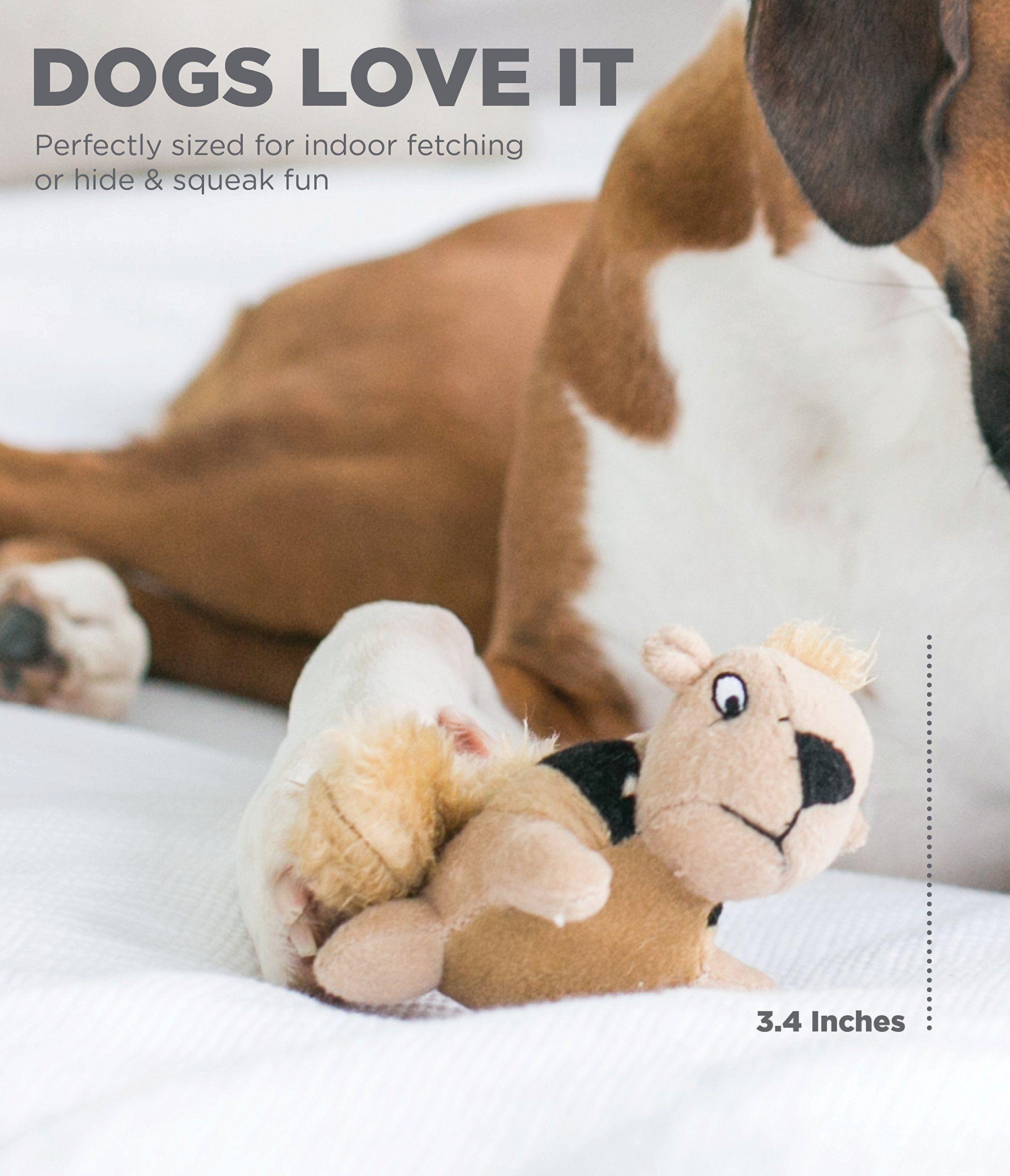 Outward Hound Squeakina Animals Dog Squeak Toys You Can Get