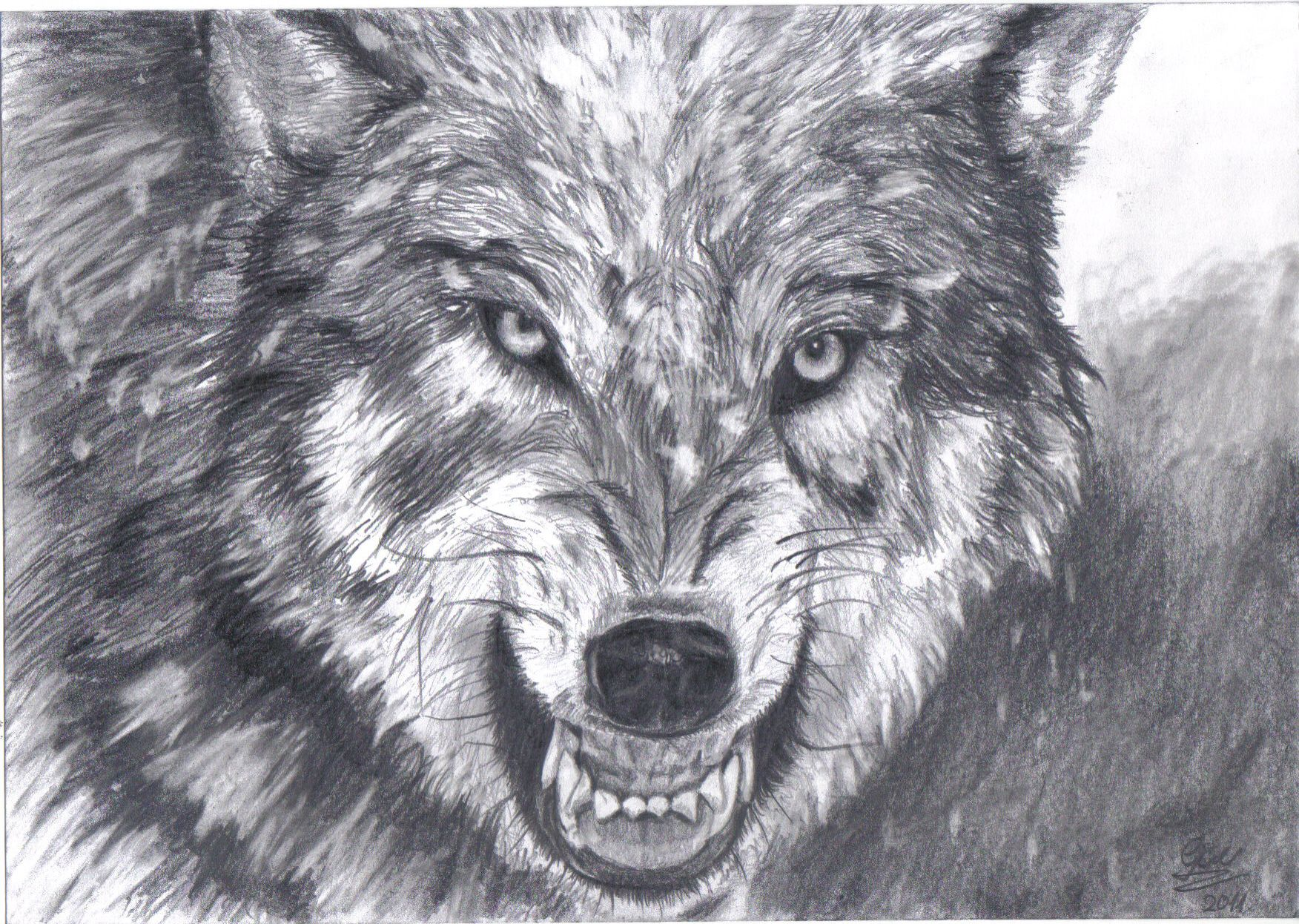 Wolf Drawing Yahoo Image Search Results Cool Drawings Wolf